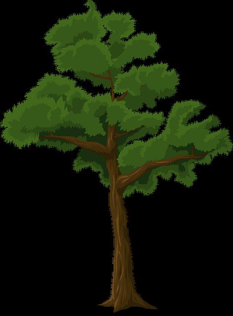 Lunge Stärken Waldluft